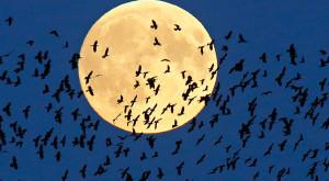 Eclipsa de Super Lună: cele mai impresionante imagini