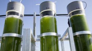 În viitor, ai putea să-ți alimentezi mașina cu alge