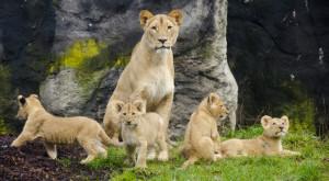 """O """"grădină zoo înghețată"""" ar putea salva speciile pe cale de dispariție"""