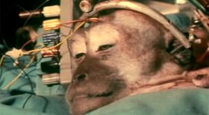 Transplantul de cap, din Frankenstein în realitate: un chirurg a reușit tehnica pe o maimuță