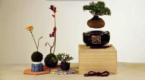 Floating Bonsai este un bonsai care plutește pe un câmp magnetic