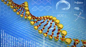 Tinerețe și bătrânețe: care sunt genele care influențează durata de viață