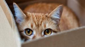 Paradoxul pisicii lui Schrodinger a fost demonstrat în laborator