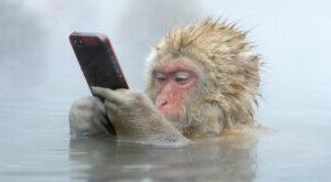 Motivul pentru care maimuțele nu pot vorbi