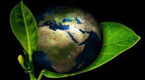 Frunza moleculară poate colecta energia solară în mod eficient