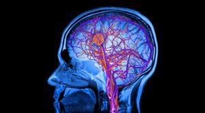 Care este legătura dintre sânge şi inteligență