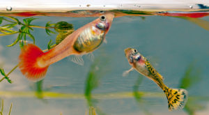 Peștii au personalitate, la fel ca oamenii, chiar dacă nu-i ajută prea mult