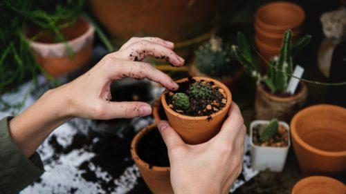 Oamenii de știință au aflat ce simt plantele (dacă voiai să știi)