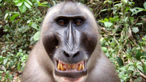 Motivul pentru care oamenii nu au blană, ca maimuțele