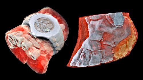 Prima radiografie color îți arată cât de departe a ajuns știința