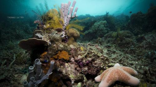 Criza fără precedent care afectează oceanele lumii cu urmări grave
